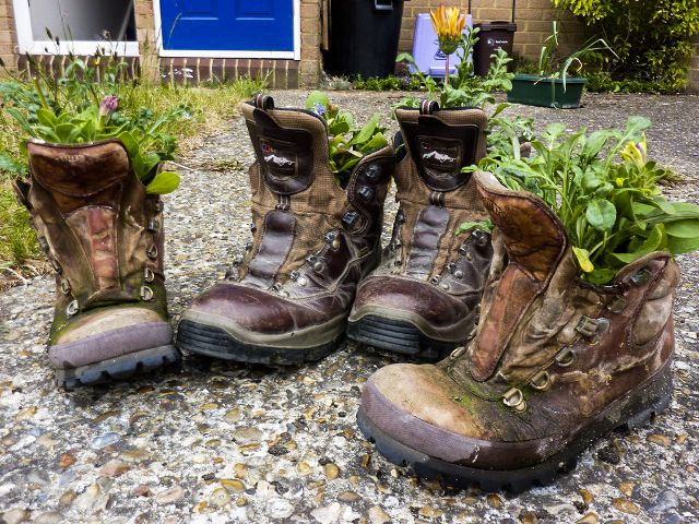 """My boots aren't the first ones to become plant pots - I """"converted"""" an old pair of Catherine's brasher boots last year too, successfully growing dwarf beans. This year all four boots are being used for flowers. Blogged about at http://ramblingman.org.uk/blog/2011/05/hiking_boot_flower_pot"""